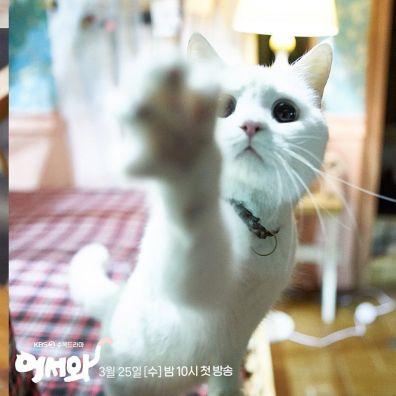 C'est le chat évidemment !