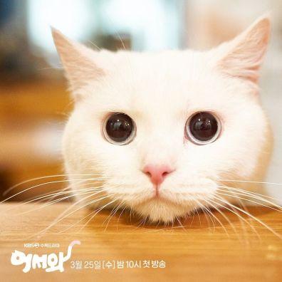 Qui est le plus mignon entre le chat...